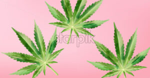 Watercolor marijuana cannabis leaves on purple background. Vector - Starpik Stock