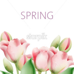 Watercolor tulip flowers with green leaves and place for text. Vector - Starpik Stock