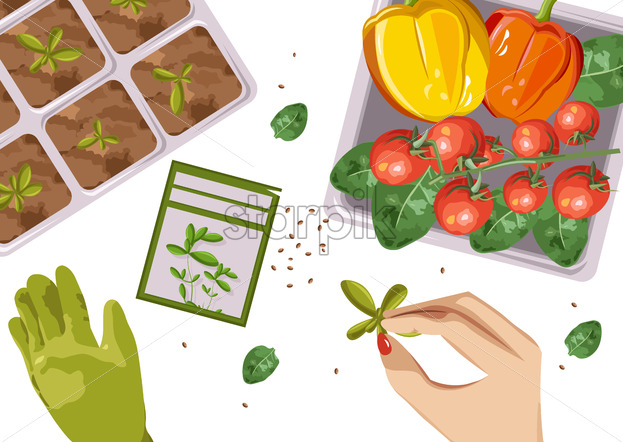 Woman hands growing Ecological products in pot. Composition with branch of red tomatoes, spinach and cucumbers. Place for text. Vector - Starpik Stock