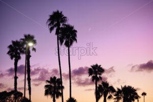 Beach with palm trees silhouette and purple sky on background. San Diego, California - Starpik Stock