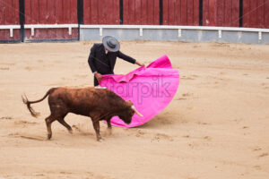 LISBON, PORTUGAL – OCTOBER 28 2019: Shot of the bullfighter holding rose coat and parrying bull's attacks - Starpik Stock