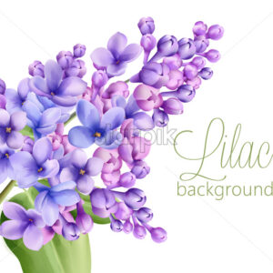 Lilac flowers on white background. Watercolor drawing. Vector - Starpik Stock