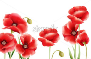 Poppy flowers on isolated background. Place for text. Watercolor. Vector - Starpik Stock