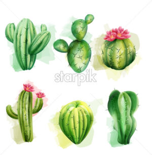 Set of cactuses. Exotic plants collection. Cactus with flower. Vector - Starpik Stock
