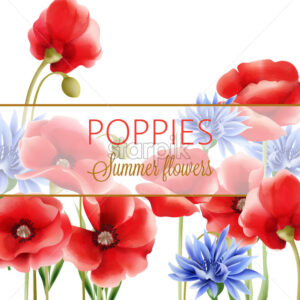 Summer flowers greeting card with blue cornflower and poppies. Watercolor. Vector - Starpik Stock