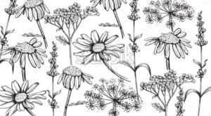 Chamomile, lavender and herbal flowers in line art style. Vector - Starpik Stock