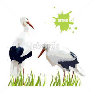 Watercolor stork birds sitting in the grass. Vector - Starpik Stock