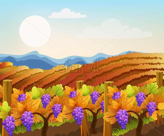 Peisage of empty and filled with grape trees fields. Vineyard. Autumn plant. Warm colors. Vector - Starpik Stock