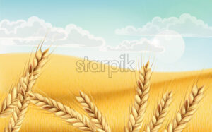 Field full of wheat grains. Blue cloudy sky. Realistic 3D mockup product placement. Vector - Starpik Stock
