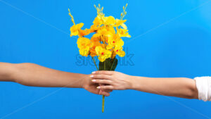 Man giving yellow flowers to a woman on blue background. Two hands. Love concept. - Starpik Stock