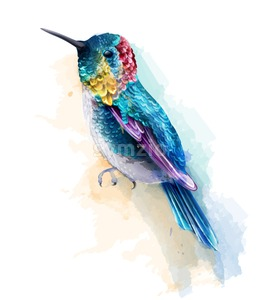 Colorful humming bird watercolor Vector. Tropic card background Stock Vector