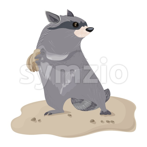 Raccoon isolated Vector. Cute cartoon character illustration Stock Vector