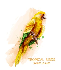 Tropic Parrot yellow bird Vector watercolor illustration. Cute bird on a brach isolated on white Stock Vector