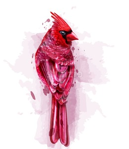 Cardinal red bird watercolor Vector. isolated on white illustration Stock Vector