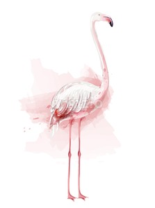 Flamingo watercolor Vector. pink bird isolated on white illustration Stock Vector