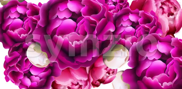 Peony flowers card background Vector. Beautiful spring template Stock Vector