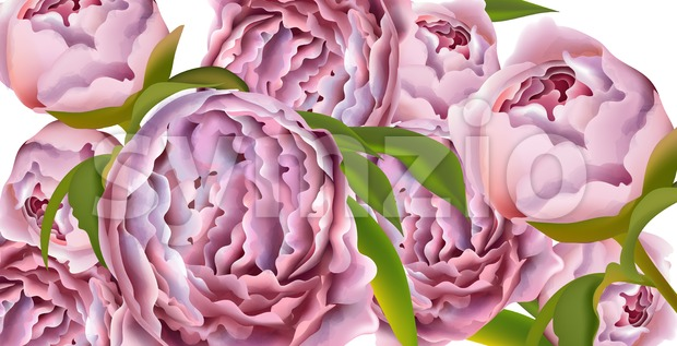 Pink peony flowers card background Vector. Beautiful spring template Stock Vector