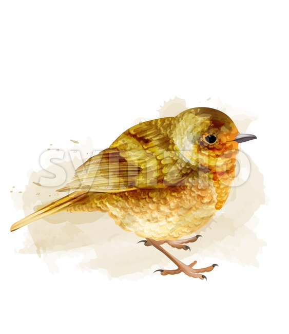 Small sparrow vector watercolor. cute bird isolated on white illustration Stock Vector
