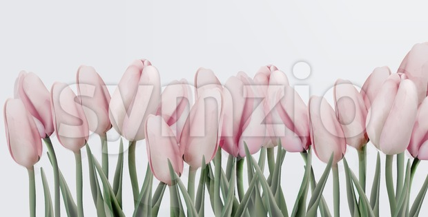 Pink tulips card Vector. Wedding, save the date, ceremony, birthday invitation