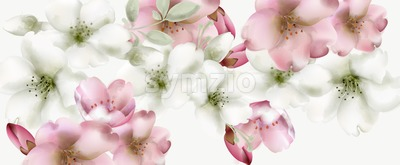 Cherry flowers watercolor Vector. Delicate spring blossom background Stock Vector