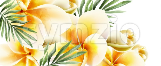 Plumeria yellow flowers Vector watercolor. Summer time paradise card. Wedding ceremony invitation. Exotic festival background Stock Vector