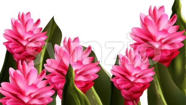 Pink ginger tropic flower Vector watercolor. Exotic banner summer paradise Stock Vector