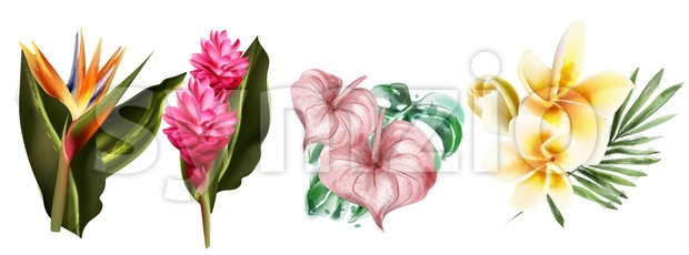 Tropic flowers set collection Vector watercolor. Exotic botanical decor Stock Vector