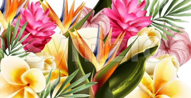 Tropic flowers Vector watercolor background. Exotic botanical card Stock Vector