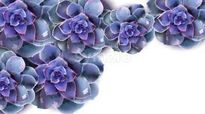 Spring banner with blue succulent flower Vector watercolor white background Stock Vector