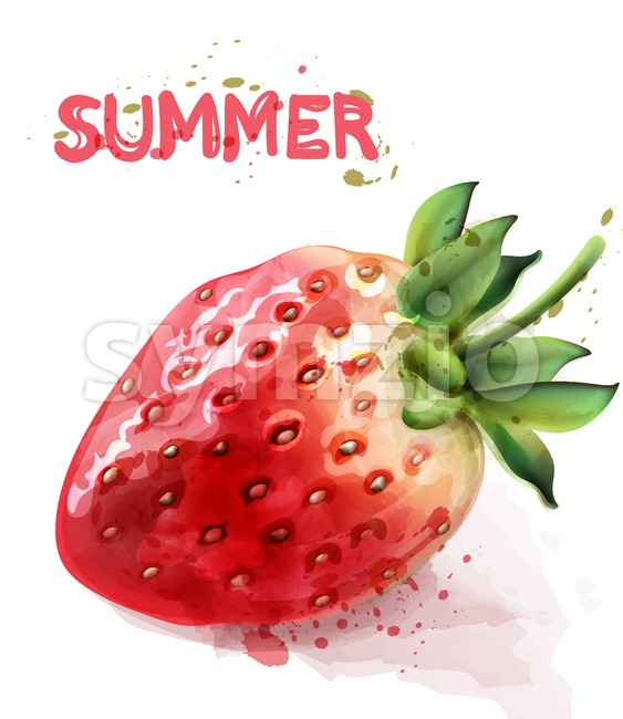 Strawberry isolated Vector watercolor. Fresh fruit summer seasonal card Stock Vector
