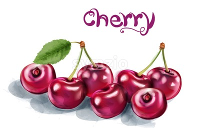Cherry Vector watercolor. Fresh juicy aromatic fruits isolated on white Stock Vector