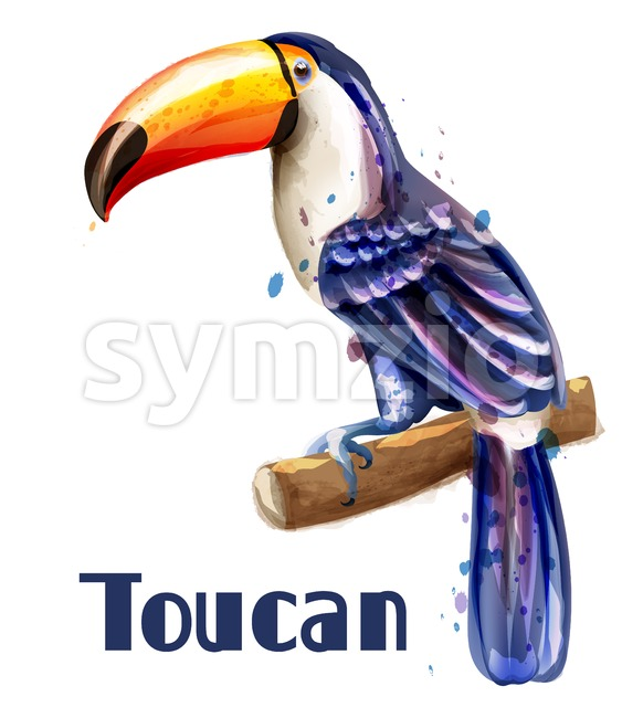Toucan parrot isolated Vector watercolor. Exotic summer bird illustration Stock Vector