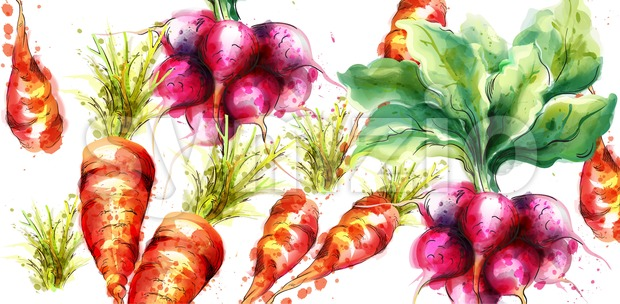 Carrots and radish Vector watercolor. Fresh spring veggies Stock Vector