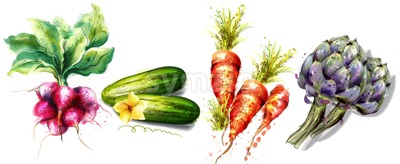 Radish, cucumber, carrots and artichoke Vegetables Vector watercolor isolated on white Stock Vector