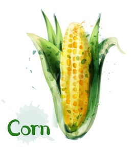 Corn icon watercolor Vector. Delicious maize template icon Stock Vector