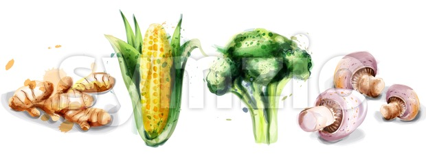 Vegetables watercolor Vector set collection. Mushrooms, corn, brocoli and ginger Stock Vector