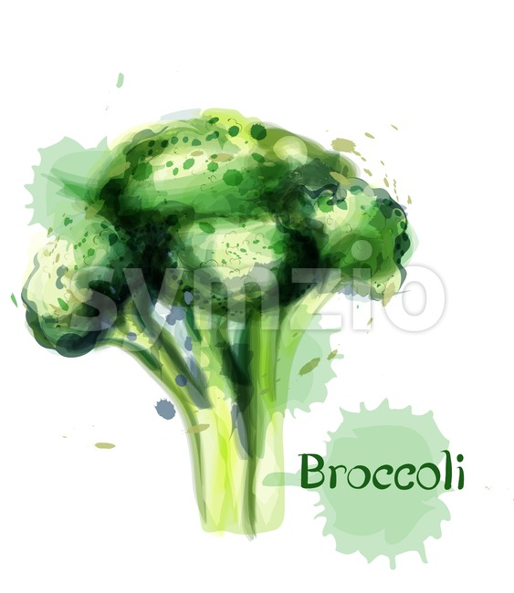 Brocoli icon Vector watercolor. delicious green vegetable template Stock Vector