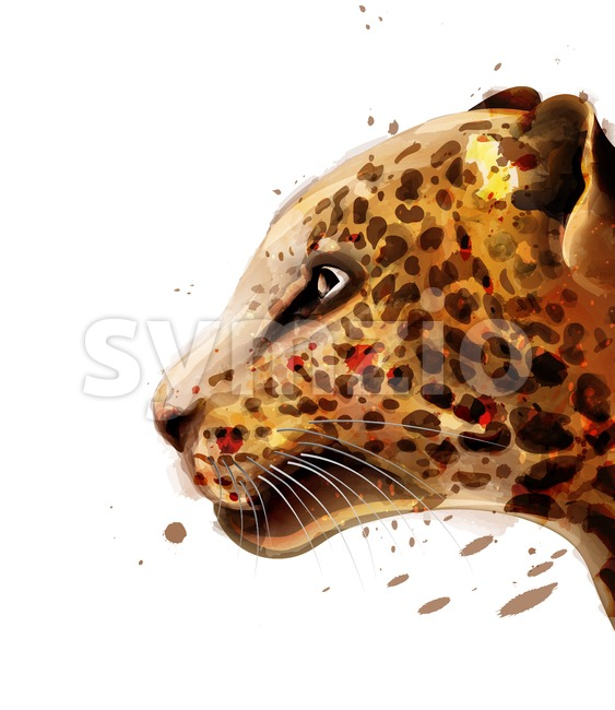 Leopard Vector watercolor. colorful detailed illustration wildlife Stock Vector