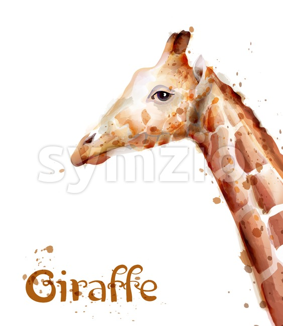 Giraffe Vector watercolor. wildlife safari animals isolated on white