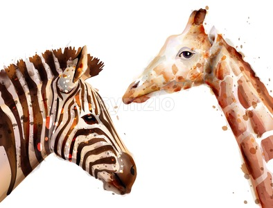 zebra and giraffe Vector watercolor. wildlife safari animal Stock Vector