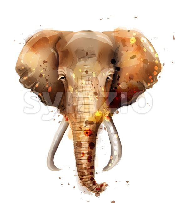 Elephant vector watercolor. Wildlife animal front view illustration