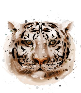 Tiger vector watercolor. Wildlife annimal front view illustration Stock Vector