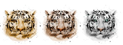 Tigers vector watercolor. Wildlife annimals collection illustration Stock Vector