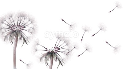 Dandelion card Vector watercolor. Summer floral frame decor Stock Vector
