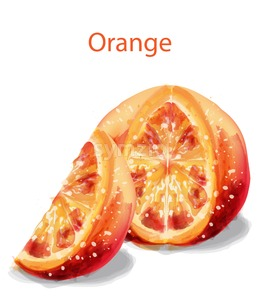 Orange slice fruits Vector watercolor illustration isolated on white Stock Vector