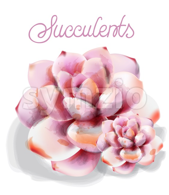 Succulent flower Vector watercolor isolated. Vintage floral declicare decor Stock Vector