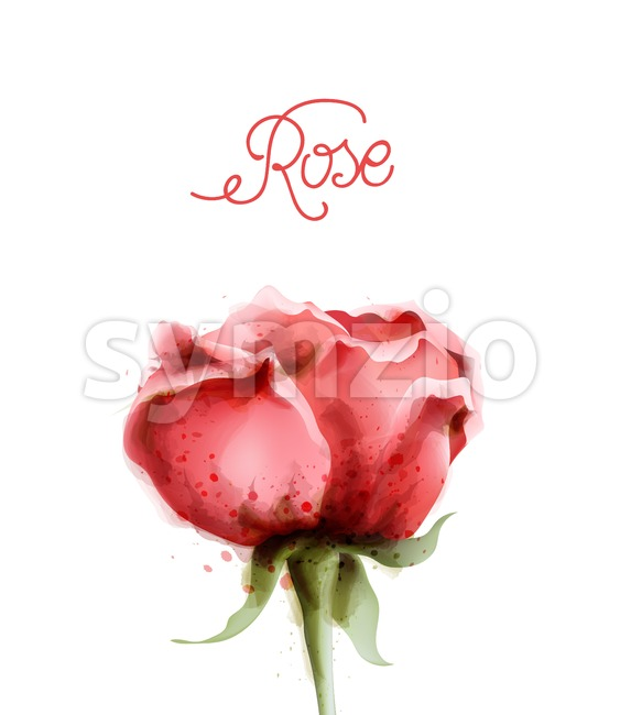 Rose flower pink isolated Vector watercolor. Vintage delicate light floral decor Stock Vector