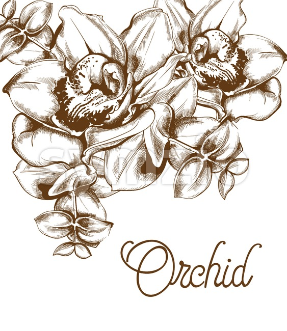 Orchid flowers and line art Vector. Old effect bouquet decor. wedding card elements. save the date Stock Vector