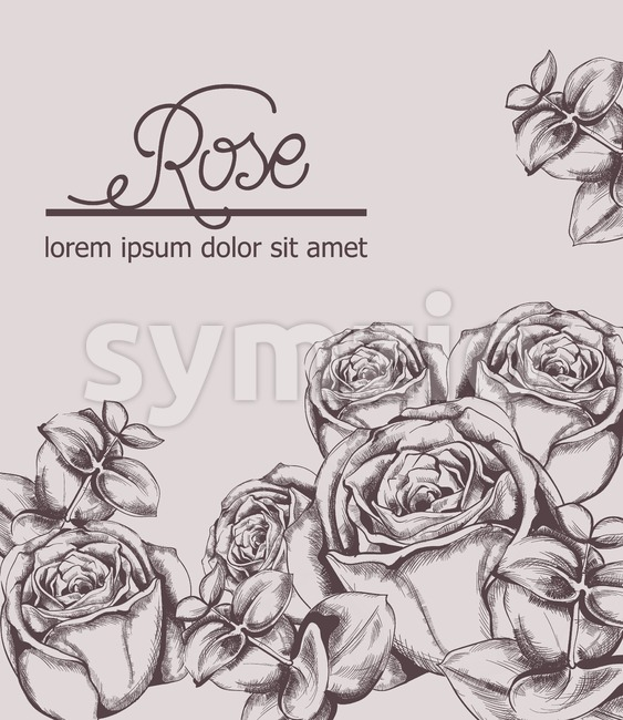 Vintage roses card Vector line art. Boho style posters. Pink color Stock Vector