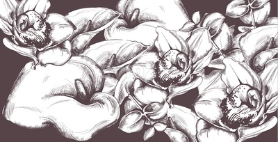 Vintage pattern calla flowers and orchids line art Vector. Old effect backgrounds Stock Vector